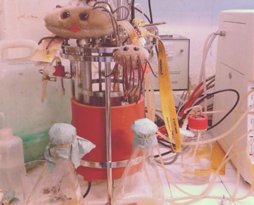 Biotransformacion con en Bioreactor (Foto de María Agustina Vila)